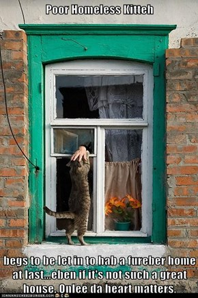 Poor Homeless Kitteh  begs to be let in