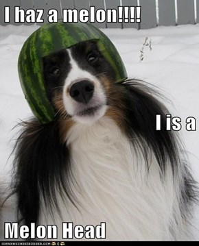 I haz a melon!!!! I is a  Melon Head
