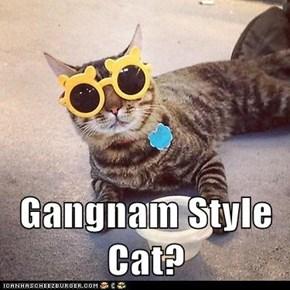 Gangnam Style Cat?
