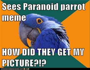 Sees Paranoid parrot meme  HOW DID THEY GET MY PICTURE?!?