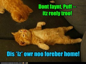 Formerly Homeless Kitteh haz a faynt almost