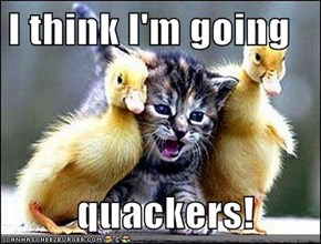 I think I'm going    quackers!