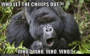 WHO LET THE CHIMPS OUT?!  WHO? WHO, WHO, WHO?