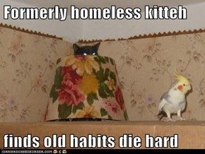 Formerly homeless kitteh   finds old habits die hard