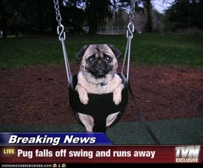 Breaking News - Pug falls off swing and runs away