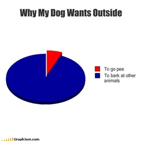 Why My Dog Wants Outside