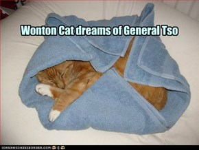 Wonton Cat dreams of General Tso