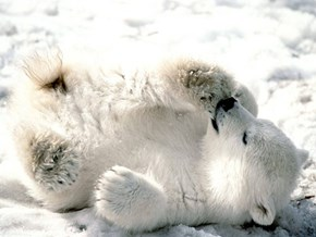 Squee Spree: Rolling Around