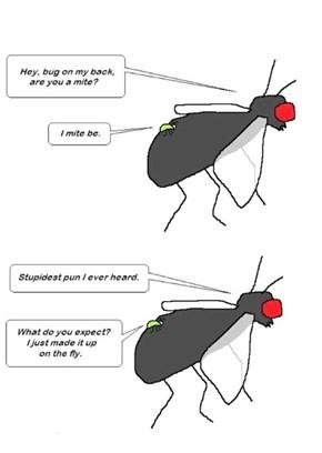 Insect Humor, Amirite?