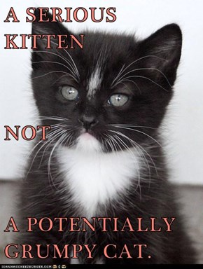 A SERIOUS KITTEN NOT A POTENTIALLY GRUMPY CAT.
