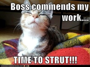 Boss commends my work....  TIME TO STRUT!!!
