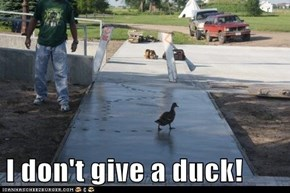 I don't give a duck!