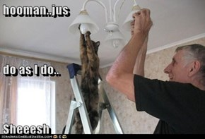 hooman..jus   do as I do.. Sheeesh
