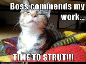 Boss commends my work...  TIME TO STRUT!!!