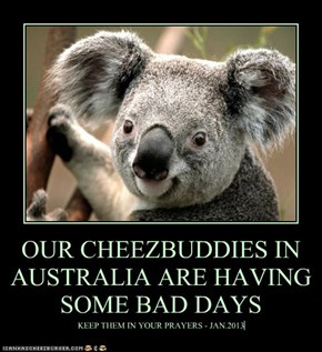 OUR CHEEZBUDDIES IN AUSTRALIA ARE HAVING SOME BAD DAYS