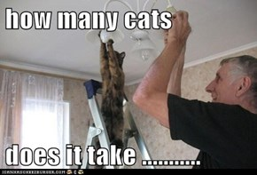 how many cats  does it take ...........