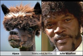 Alpaca Totally Looks Like Jules Winnfield