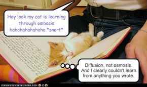 Hey look my cat is learning through osmosis hahahahahahaha *snort*