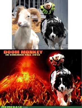 Doom Monkey