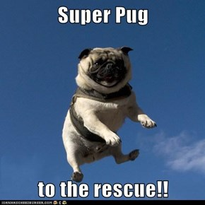 Super Pug  to the rescue!!
