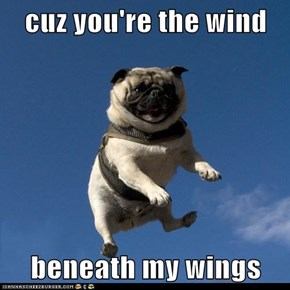 cuz you're the wind  beneath my wings