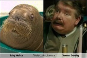 Baby Walrus Totally Looks Like Vernon Dursley