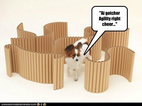 """Ai gotcher Agility right  cheer..."""