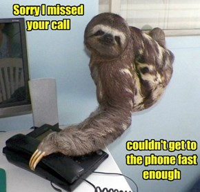 Stop Being Such a Sloth