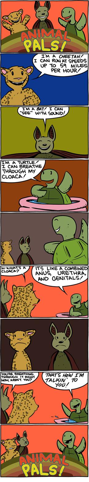 Animal Pals!