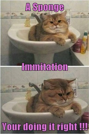 A Sponge Immitation Your doing it right !!!