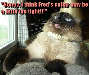 """Honey, I think Fred's collar may be a little too tight!!!"""