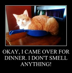 OKAY, I CAME OVER FOR DINNER. I DON'T SMELL ANYTHING!