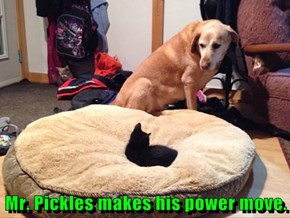 Mr. Pickles makes his power move.