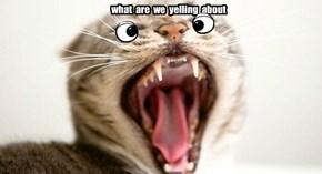 yelling kitty