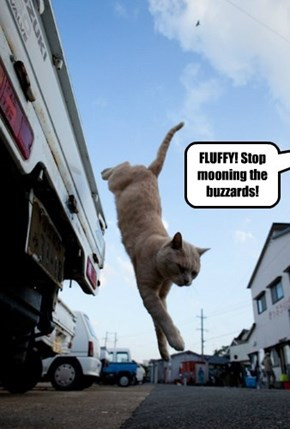 FLUFFY! Stop mooning the buzzards!
