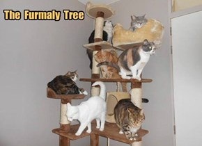 The  Furmaly  Tree