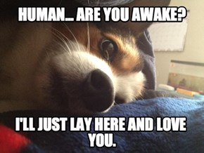 Overly Attached Puppy