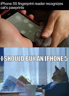 Apple is Cat-Friendly
