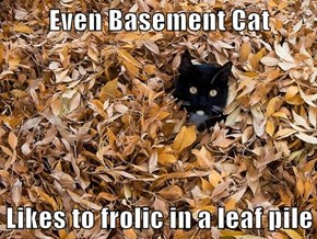 Even Basement Cat  Likes to frolic in a leaf pile