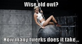 Wise old owl?  How many twerks does it take...