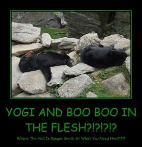 YOGI AND BOO BOO IN THE FLESH?!?!?!?