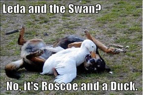 Leda and the Swan?  No, it's Roscoe and a Duck.
