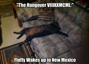 """The Hangover VIIIXXMCML:""          Fluffy Wakes up in New Mexico"