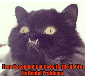 Even Basement Cat Goes To The Vet To Fix Dental Problems.