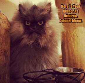 Here Is Your Dinner As Ordered, Colonel Meow.