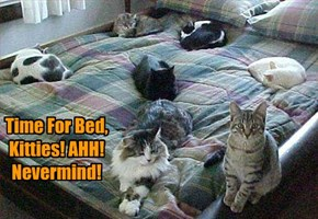 Time For Bed, Kitties! AHH! Nevermind!