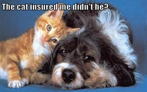 The cat insured me didn't he?