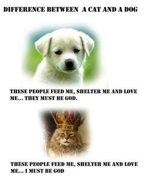 What a Dog Thinks Versus What a Cat Thinks