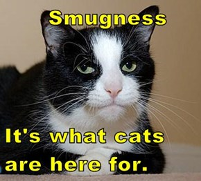 Smugness  It's what cats are here for.
