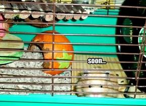 Hamster attack. Soon...